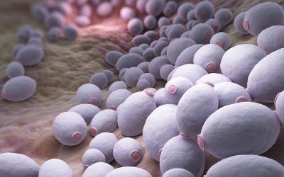 Candida Albicans – des symptômes méconnus